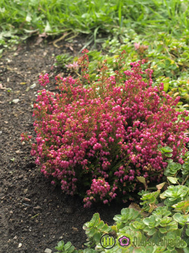 Podzimní květy našich zahrad 3