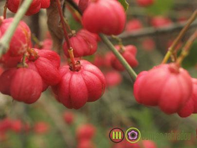 Podzomní plody 2