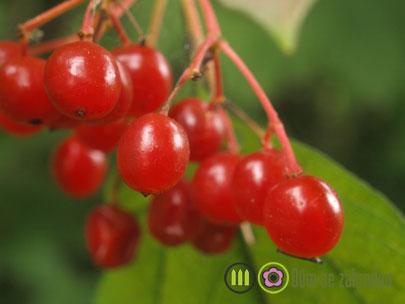 Podzomní plody 1