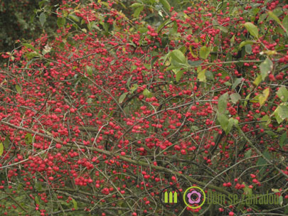 zahrada v listopadu 3
